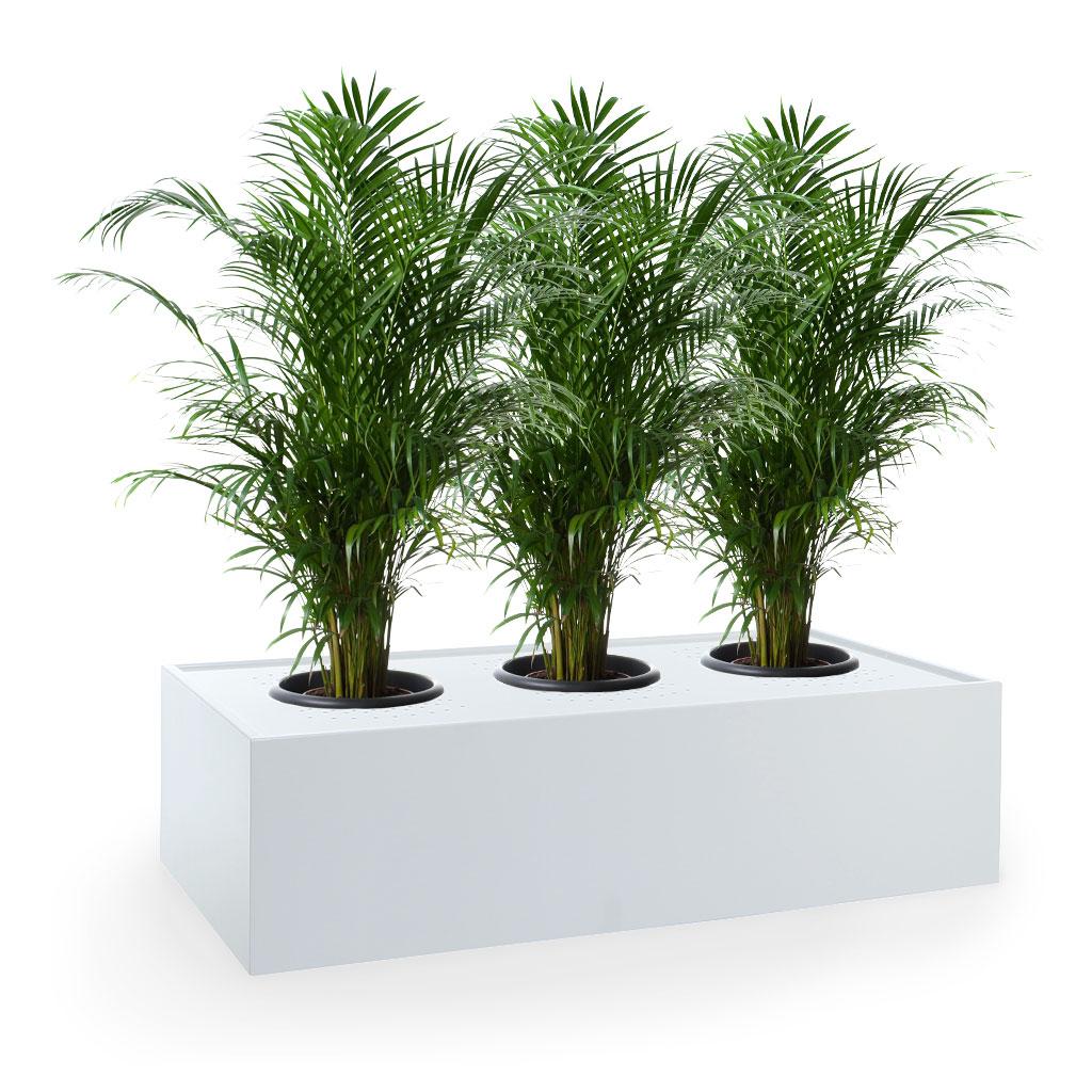 Octave Planter Box Plants